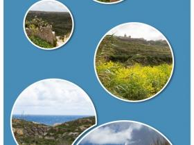 gozo6Collage